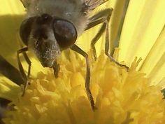 Ojos de abeja