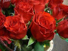 Rose gr. Hot Blood