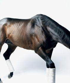Versammlung horses pinterest pferde pferde reiten for Minimalismus haustiere