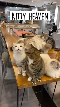 Funny Cute Cats, Cute Cats And Kittens, Cute Funny Animals, Baby Cats, Kittens Cutest, Cute Cat Gif, Cute Wild Animals, Cute Little Animals, Cute Animal Videos