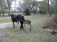 Another foal at Hollands Wood campsite