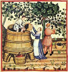 Pressing wine after the harvest; Tacuinum Sanitatis, 14th century