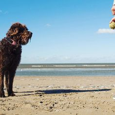 When shooting our summer collection, we took our #officedog Ollie with us! He clearly didn't mind running around at the beach. 🐶🎾 . . #dog #animallovers #throwtheball #letsdothiseveryday #beach #photooftheday #officefun #summer