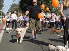 BONDE DA BARDOT: SP: Cães se reúnem para passeio divertido em prol de ONGs em Campinas (11/09)