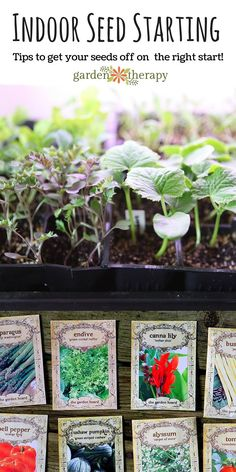 Seed starting is a fun early season gardening project. It takes up a little space and even less time, but the rewards are huge. There are many reasons why people grow their flowers and vegetable plants from seed: to save money, to grow rare cultivars, and for fun. Overall, though, growing your own seeds from scratch means that you are certain what sort of soil, fertilizer, additives and growing conditions your plants have been subjected to.  #sponsored