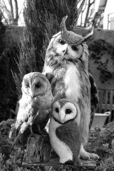 § Mláďata Zvířat, Nádherní Ptáci, Divoká Zvířata, Legrační Zvířata, Sova Pálená
