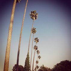 California love! - @sharzadkiadeh- #webstagram