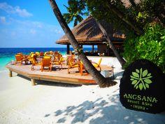Das Dritte von insgesamt 4 Resorts - es ging zum Angsana Ihuru Resort & Spa! Hier habe ich erneut meine besten Bilder. Im nächsten Leben werde ich übrigens Papageienfisch, ehrlich wahr. Hier entlang: