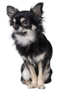 ASPCA | What To Do If Your Pet Is Poisoned