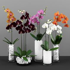 Phalaenopsis Orchids Mannequin 251 Free Obtain Phalaenopsis Orchids Mannequin 251 Free Obtain Indoor Orchids, Orchids Garden, Orchid Plants, Flowers Garden, House Plants Decor, Plant Decor, Orchid Flower Arrangements, Orquideas Cymbidium, Growing Orchids