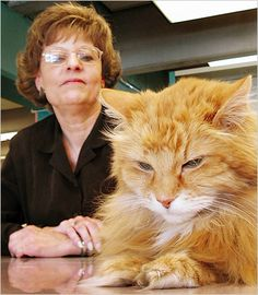 Dewey, the long-lived library cat with Vicki Myron, Spenser, Iowa.  A great book was written about Dewey.