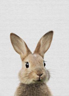 Baby Room Art, Nursery Wall Art, Nursery Decor, Room Decor, Woodland Animal Nursery, Woodland Animals, Baby Animals, Cute Animals, Rabbit Art