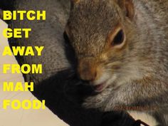 This is a picture I edited that my dad took of this fat squirrel that comes to our house everyday XD - See this image on Photobucket.