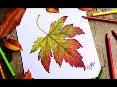 Tips and Techniques For Realistic Colored Pencil Artists - Drawing On Demand Tree Drawings Pencil, Fall Drawings, Colored Pencil Artwork, Pencil Drawing Tutorials, Color Pencil Art, Drawing Ideas, Maple Leaf Drawing, Fall Leaves Drawing, Leaves Sketch