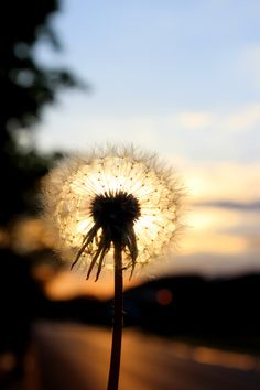 I am incredibly proud of this shot. Dandelions are one of my favorites.