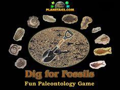 Excavate SFossils