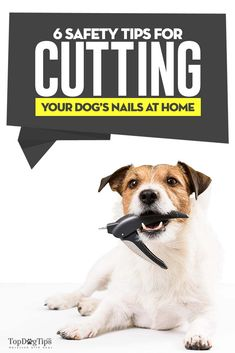 405 best best dog grooming tools images on pinterest dog grooming 6 safety tips for cutting your dogs nails by yourself solutioingenieria Image collections