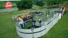 - Balanças Açôres - Balanças para boi, gado, agronegôcio, indústria, caminhões.