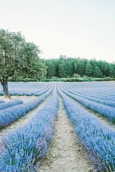In the Spotlight: Gordes, France We'll never be able to get enough of the lavender fields in the valleys of the South of France. There's something about the natural symmetry and pastel color....