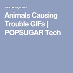 Animals Causing Trouble GIFs | POPSUGAR Tech
