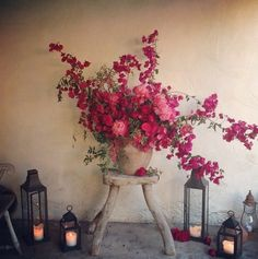 bougainvillea + lanterns