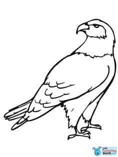 Hawk Bird Coloring Pages Sketch Coloring Page Coloring Pages To Print, Animal Coloring Pages, Free Printable Coloring Pages, Coloring Book Pages, Coloring Pages For Kids, Kids Coloring, Bird Drawings, Easy Drawings, Fly Drawing