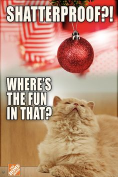 A Grumpy Cat Complains About The Holiday Season - DesignTAXI.com