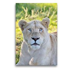 Most Beautiful, Lion, Wall Art, Portraits, Nature, Monat, Animals, Artworks, Color