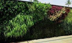 Incremento de jardines verticales