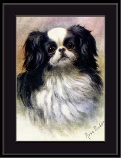 English-Print-Japanese-Chin-Spaniel-Dog-Art-Picture