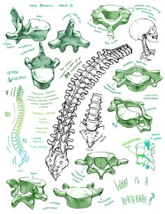fryingtoilet:  Bone portfolio for LD class from first year lol. I'm still fond of the drawings… (though the black and white ones are from li...