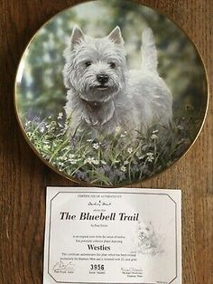 Gold Trimmed West Highland White Terrier Collector Plate The Bluebell Trail West Highland White, White Terrier, Westies, Terriers, The Collector, Trail, Plates, Animal, Gold