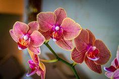 O adubo para orquídeas contém nutrientes essenciais para plantas que, devido à sua natureza vegetal, não têm a capacidade de absorver nutrientes de um substrato fértil como os outros. #adubo #orquidea#terra #façavcmesmo#jardimemecasa #jardimbarato #jardimlindo