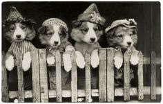 Pre-Lolcat: 13 Adorable Vintage Dogs in Costume | Rover Blog