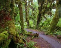 The Hall of Mosses is the name of a distinct... | Atlas Obscura
