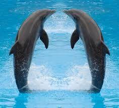 dolfijnen - Google zoeken