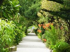 Path in Abbey Gardens, Tresco, Isles of Scilly, Cornwall, England