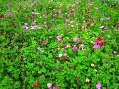 Decorate your lawn or garden with vibrant meadow flowers to achieve a beautifully random, informal feel in your outdoor spaces.