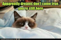 I love you Kitty cat