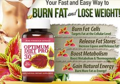 Purchase a bottle of Slim Trim 2000 - Forskolin and not only lose weight but you will also burn fat! Forskolin helps you break down fats, boost metabolism and build lean muscle. Ways To Burn Fat, How To Lose Weight Fast, Adipose Tissue, Natural Energy, Boost Metabolism, Weight Loss Smoothies, Weight Loss Supplements, Fat Fast