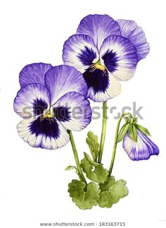 Watercolor with Pansies stock illustration. Illustration of pansy - 39057452 Watercolor Landscape, Watercolor Flowers, Watercolor Paintings, Watercolor Drawing, Flower Background Wallpaper, Flower Backgrounds, Flower Sketches, Sunflower Art, Floral Drawing