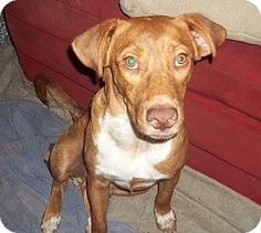 Pictures of Tucker a Labrador Retriever/Hound (Unknown Type) Mix for adoption in Miami, FL who needs a loving home.