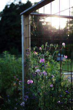 How to Make Your Outdoor Garden Planters Healthy and Beautiful? Large Planters, Outdoor Planters, Outdoor Gardens, Garden Trellis, Balcony Garden, Country House Outdoor, Big Plants, Dream Garden, Garden Planning