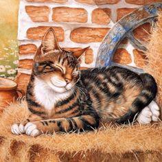 Cat portraits. Cook Debbie