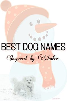 Best dog names inspired by winter