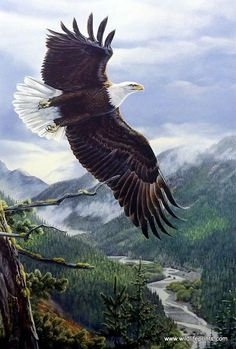 """In the print Soaring Spirit, Al Agnew has painted a majestic Bald Eagle sailing through the mountain tops, with a back-drop of a winding river. Image Size 15.5"""" x 23"""" Signed and numbered limited editi"""