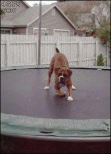 image drole chien fou