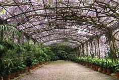 Impressive blossom in Tropical Gardens La Concepcion, Malaga