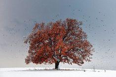 Photo Tree of Life - Evgeni Dinev Landscape Photography, Art Photography, Surf, Kelly Slater, Make Up Artis, Plant Species, Winter Landscape, Tree Of Life, Natural World