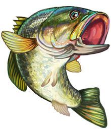 What the excitement of bass fishing is all about. Bass fishing is more than just catching a fish. Its now about getting those prized big bass and having the. Bass Fishing Tips, Kayak Fishing, Fishing Basics, Saltwater Fishing, Bass Fishing Pictures, Marlin Fishing, Crappie Fishing, Fishing Charters, Fishing Guide